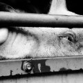 Web Development Service for Animal Rights Groups, (US)