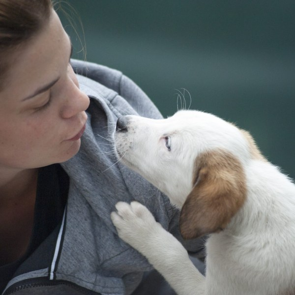 Web Development Service for Pet Counseling (yes, we really do), (US)