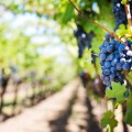 Web Development Service for wineries, (US)